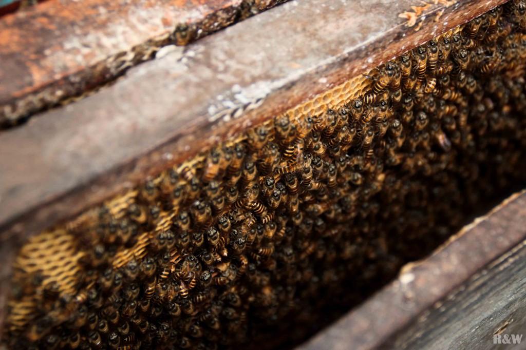 A la ferme des abeilles