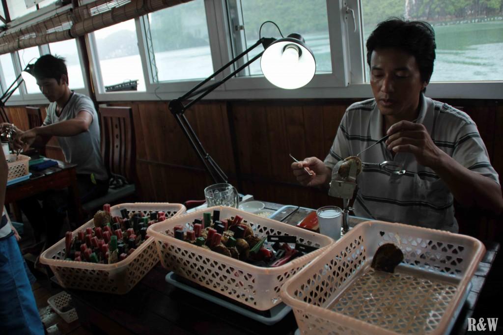 Un artisan introduit une greffe dans une huître