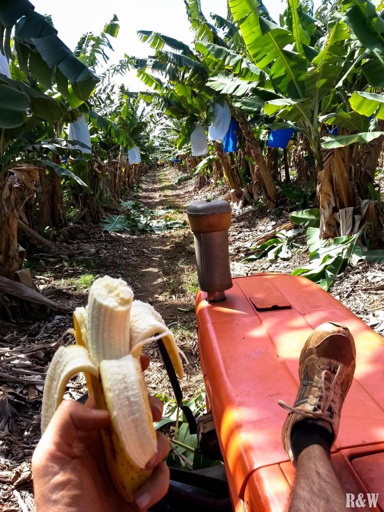 Petite pause à la Howe Farm pour Flo