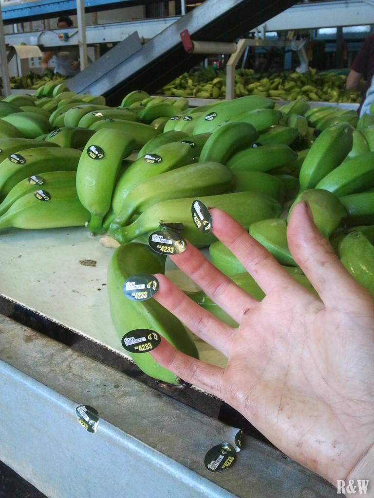 Arou colle des stickers sur des bananes