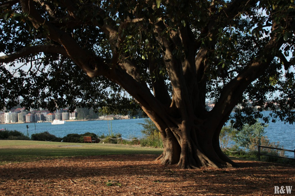 Sydney, le Royal Botanic Garden