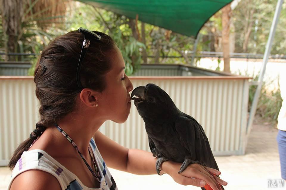Moment de tendresse entre Arou et un perroquet