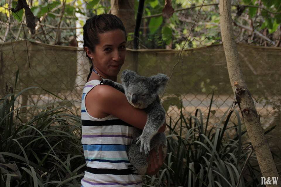 Arou, tel un eucalyptus, porte un koala