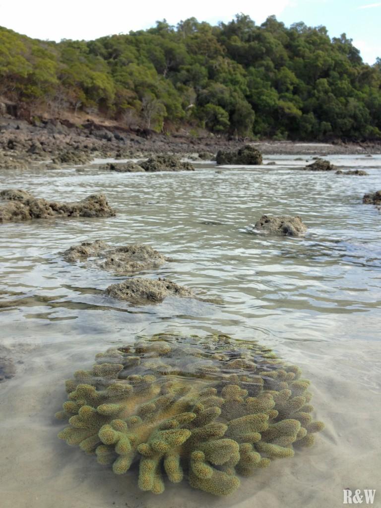 Les coraux observables sans masque, ni tuba