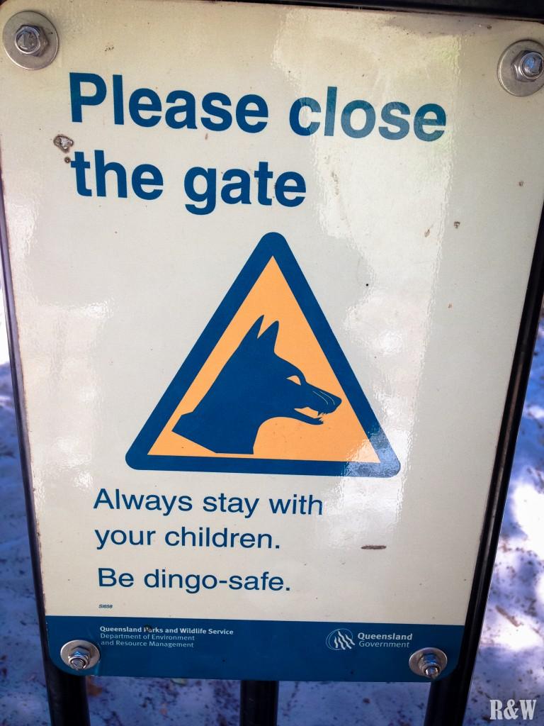De nombreux dingos sur l'île. Les chiens y sont d'ailleurs interdits pour éviter tout mélange