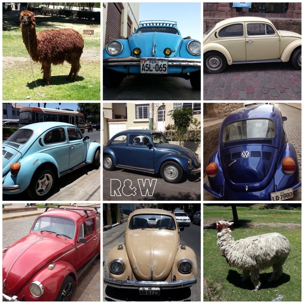Au Pérou, des lamas mais surtout des Coccinelles !