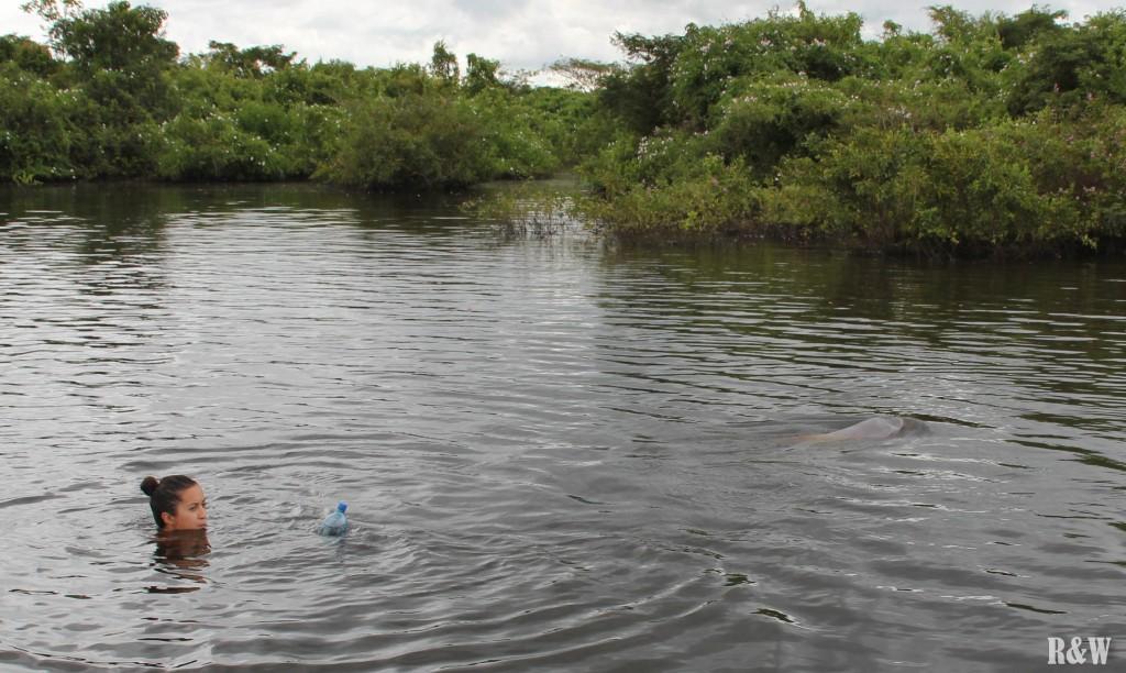 Où est le dauphin rose ?