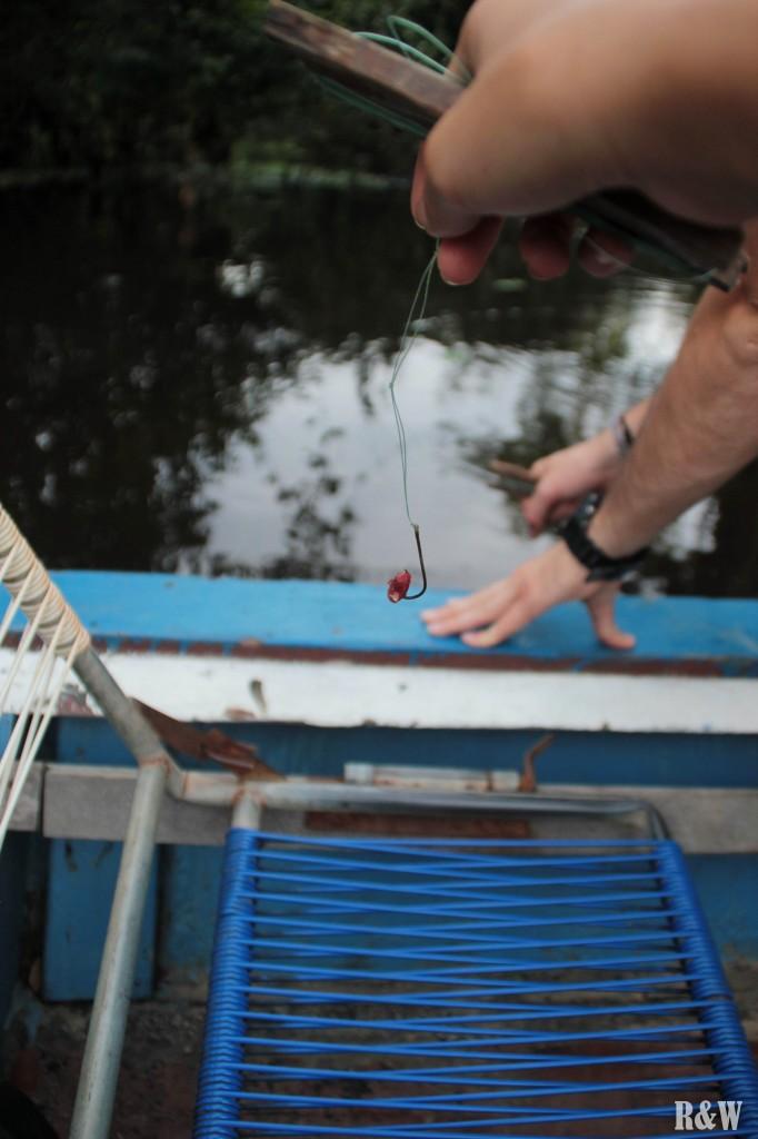 A la pêche au piranhas