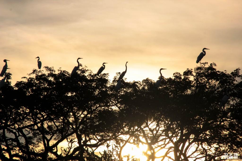 Un air de savane au coucher du soleil....