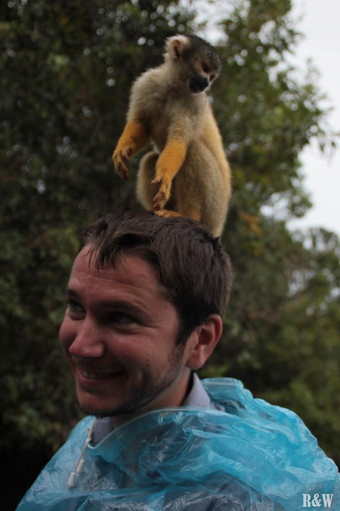 Des singes loin d'être farouches