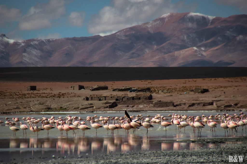 Les flamants roses de la région